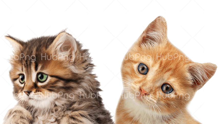 2 cats png transparent background Transparent Background Image for Free