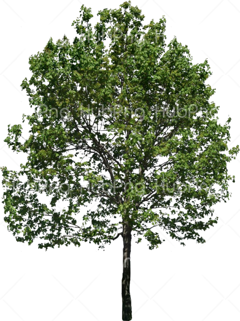 alberi tree Bäume png Transparent Background Image for Free