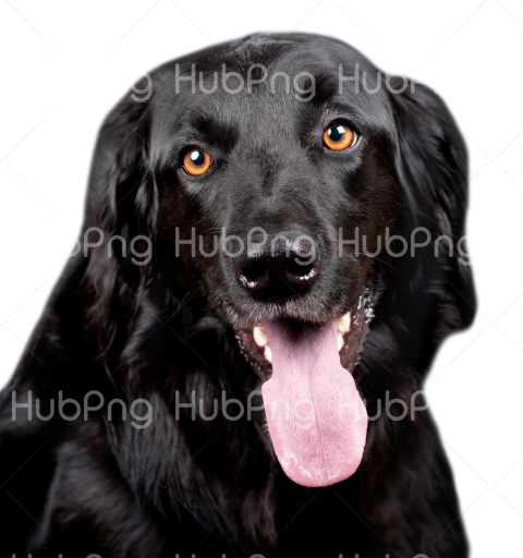 amazing black dog png Transparent Background Image for Free