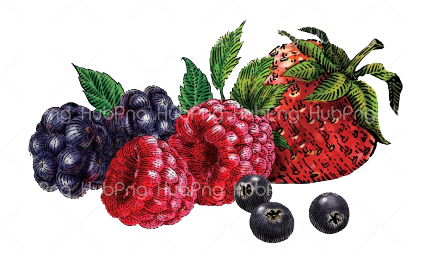 berries png clipart hd Transparent Background Image for Free