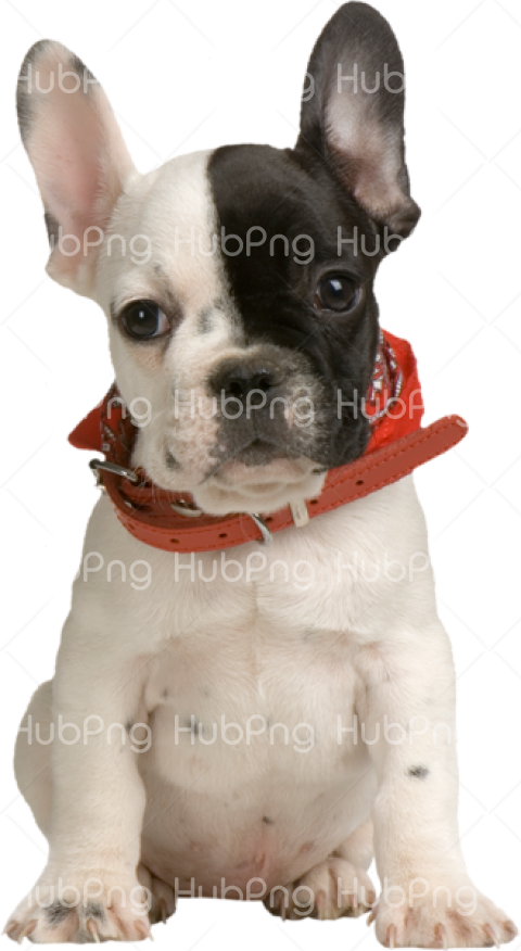 black and white dog png Transparent Background Image for Free