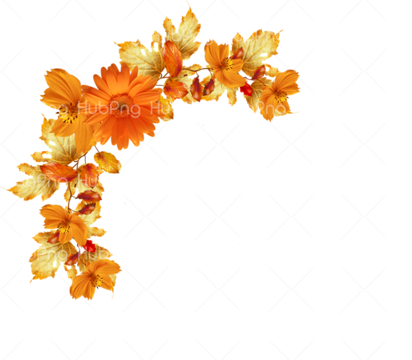 boarders flowers Transparent Background Image for Free