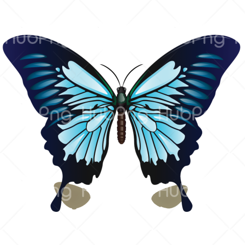 borboletas png azul Transparent Background Image for Free