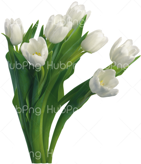 flower png transparent Transparent Background Image for Free