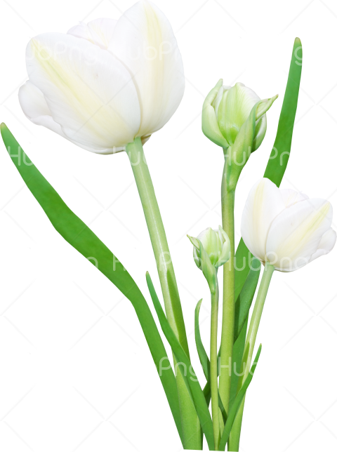 Bouquet flowers PNG image with transparent bg Transparent Background Image for Free