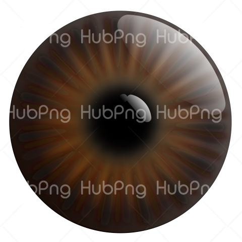 brown eye png hd Transparent Background Image for Free