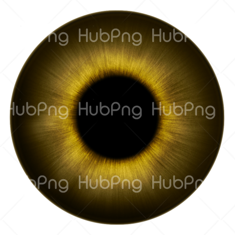 brown eyeball png Transparent Background Image for Free