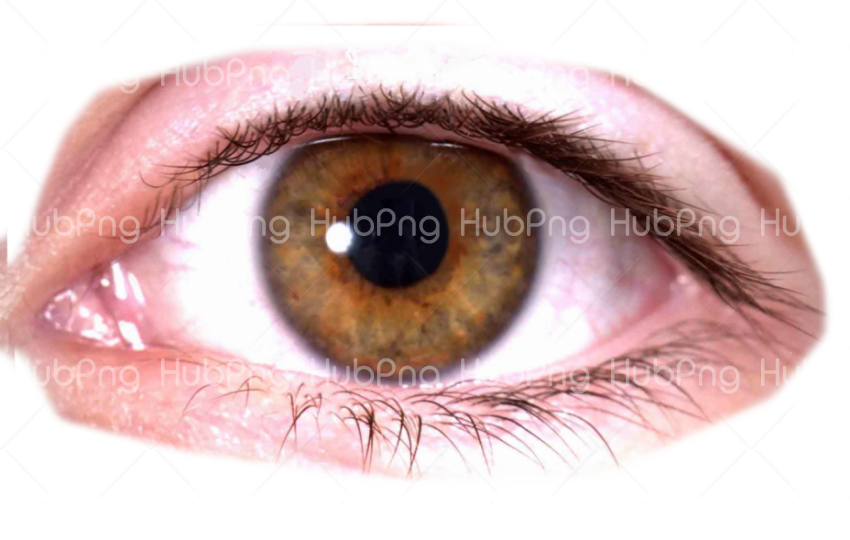 brown real eye png Transparent Background Image for Free
