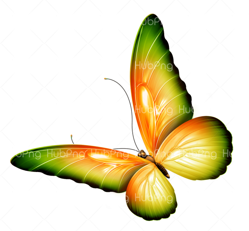 butterfuly png borboletas clipart Transparent Background Image for Free