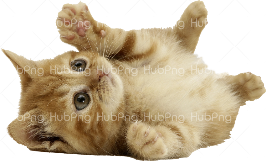 cat girl png Transparent Background Image for Free