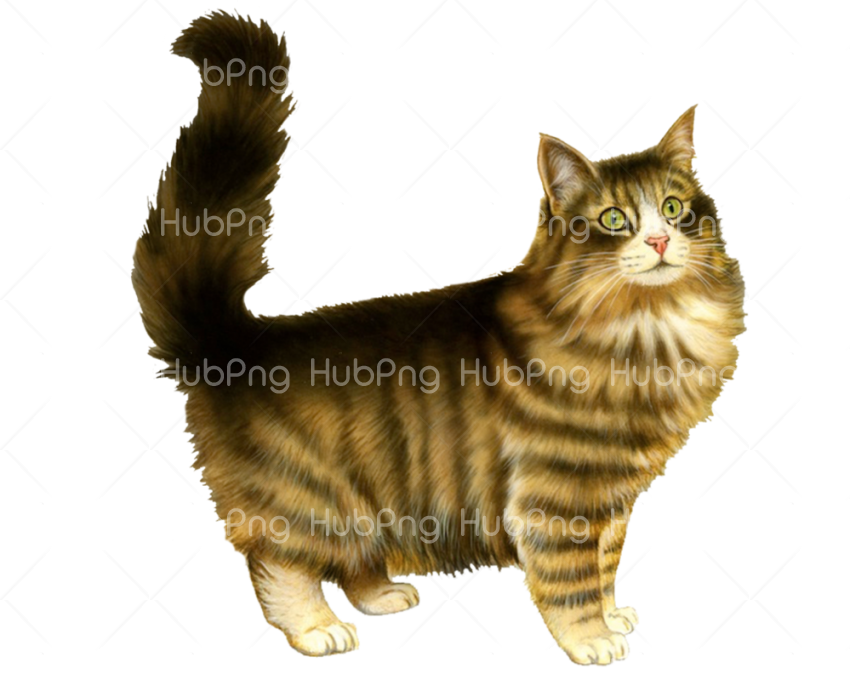 cat head png Transparent Background Image for Free