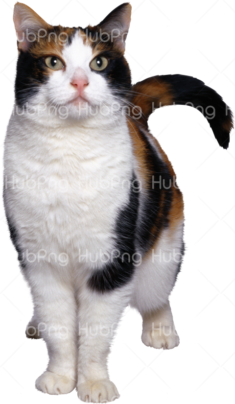 cat illustration png Transparent Background Image for Free