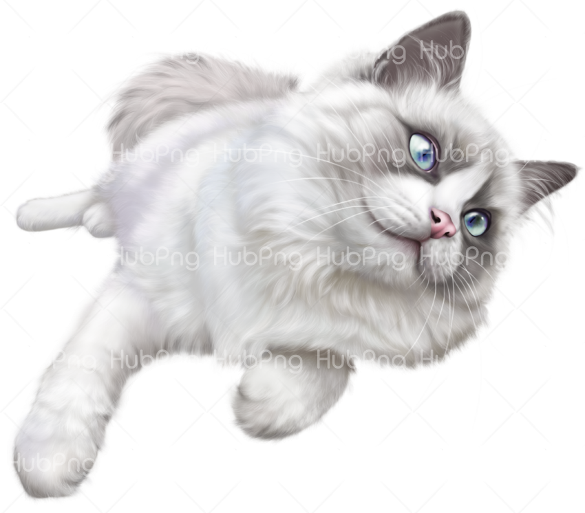 cat png Transparent Background Image for Free