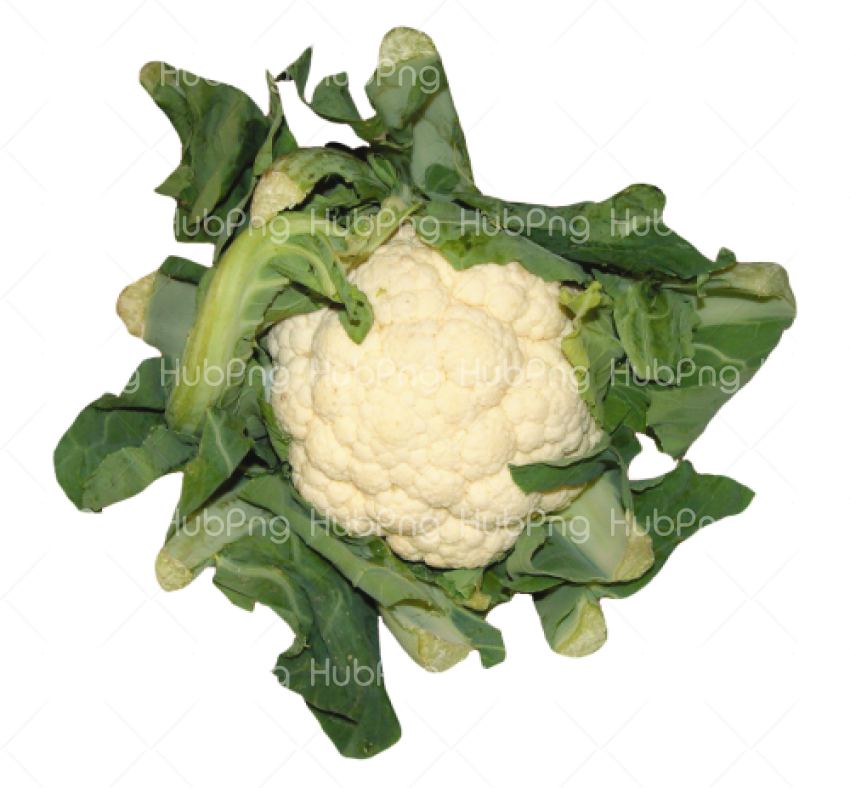 Cauliflower PNG Transparent Image Transparent Background Image for Free