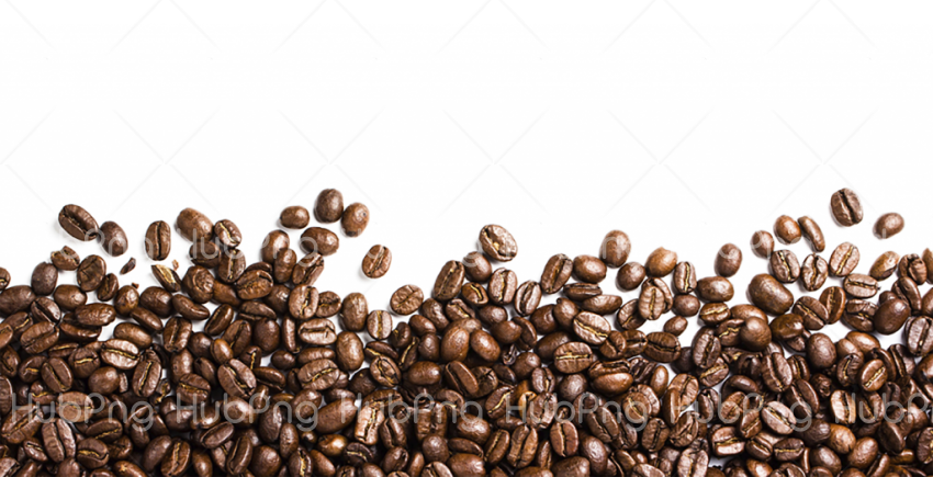 clipart coffee bean  PNG Transparent Background Image for Free