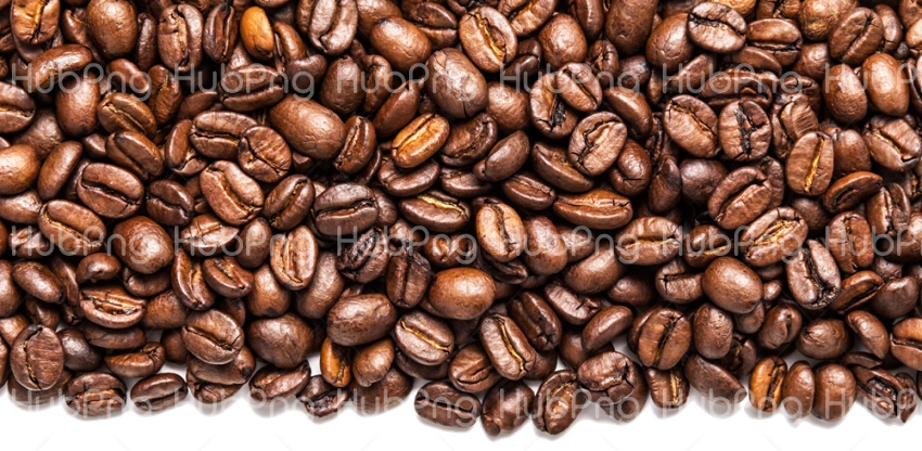 coffee bean png logo Transparent Background Image for Free