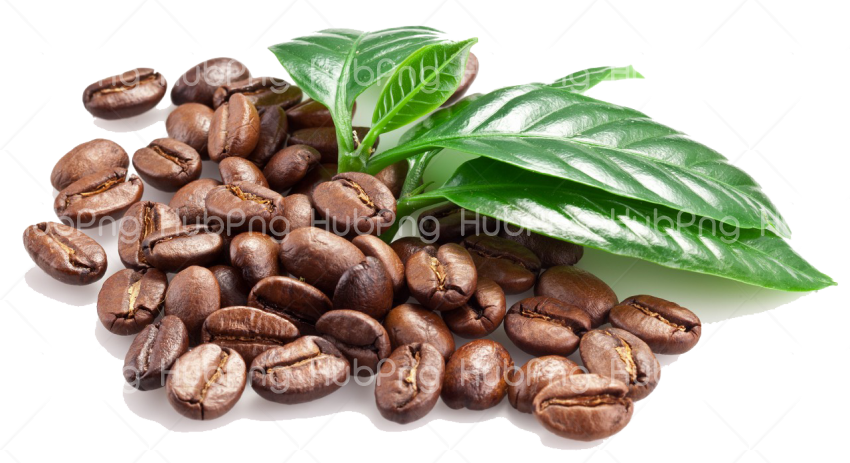 coffee beans hd png clipart Transparent Background Image for Free