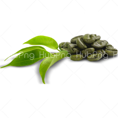 coffee beans png green Transparent Background Image for Free