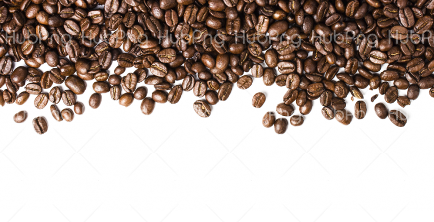 coffee beans png vector logo Transparent Background Image for Free