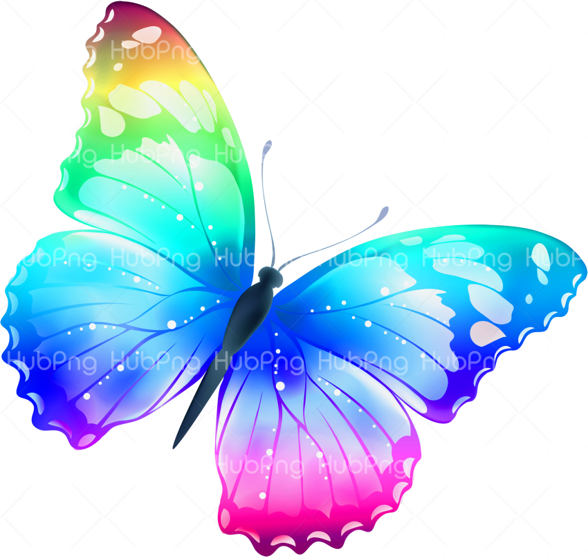 colores borboletas butterfly png Transparent Background Image for Free