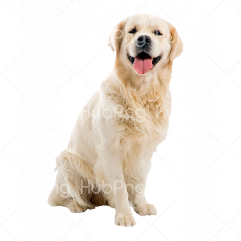 cute dog png Transparent Background Image for Free