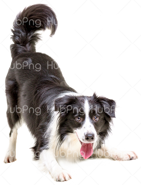 dog png Transparent Background Image for Free