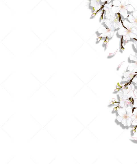 flower vector png hd border Transparent Background Image for Free