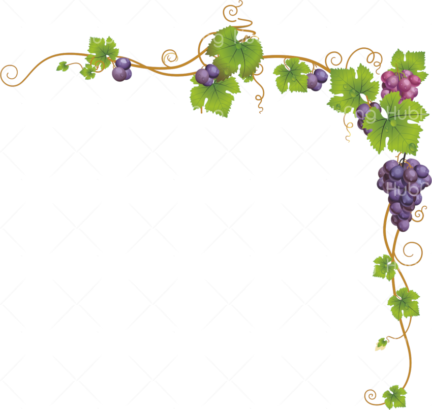 frame vines png clipart Transparent Background Image for Free