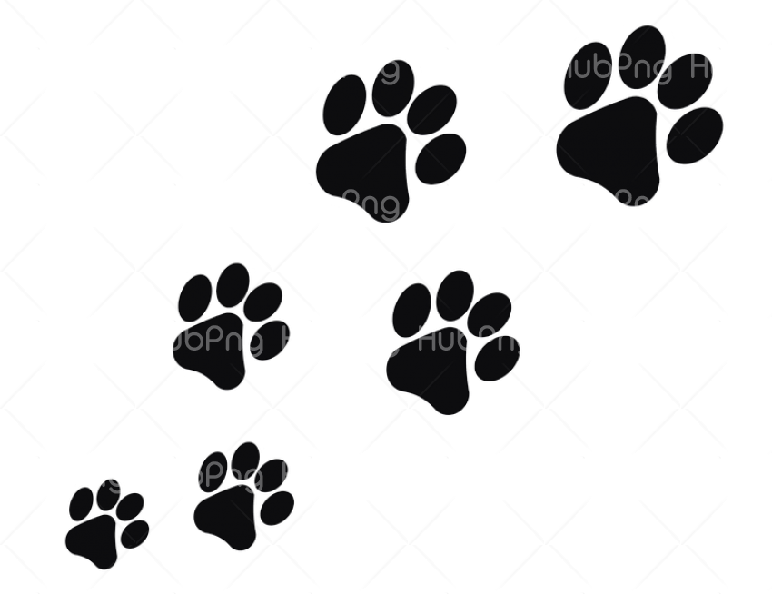 gato png leg Transparent Background Image for Free