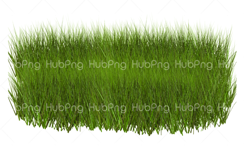 green pasto png Transparent Background Image for Free