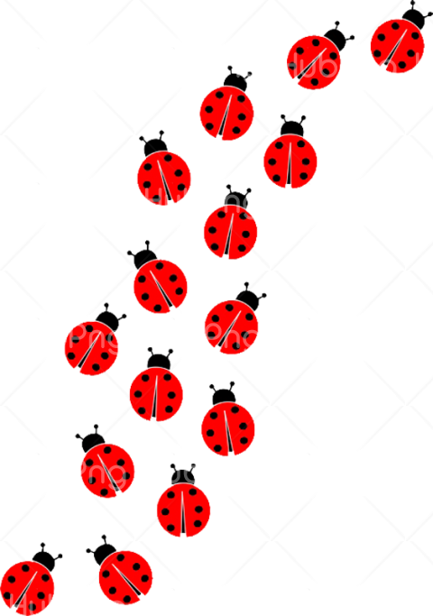 group of ladybug png Transparent Background Image for Free