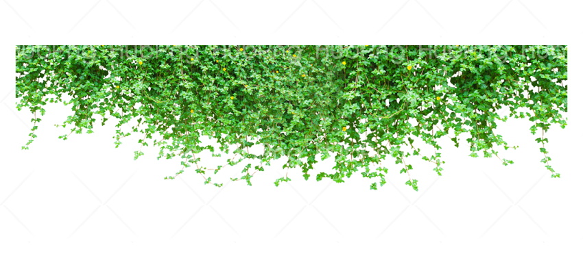 leaf png Transparent Background Image for Free
