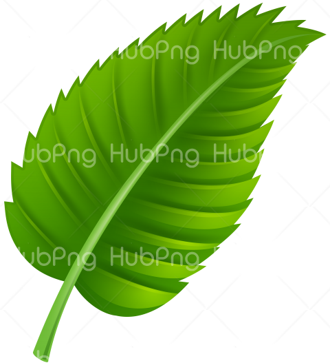 Leaf png clipart hd Transparent Background Image for Free