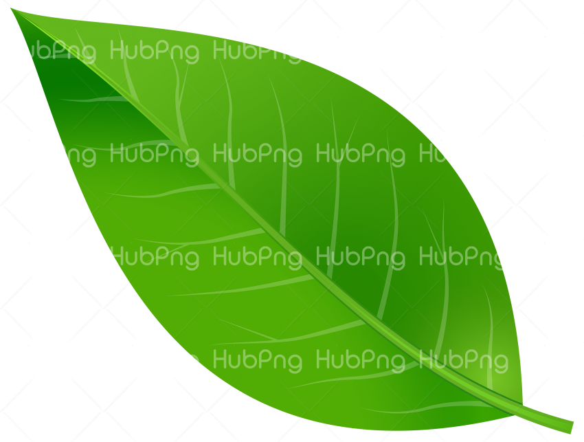 leaf png green tree Transparent Background Image for Free