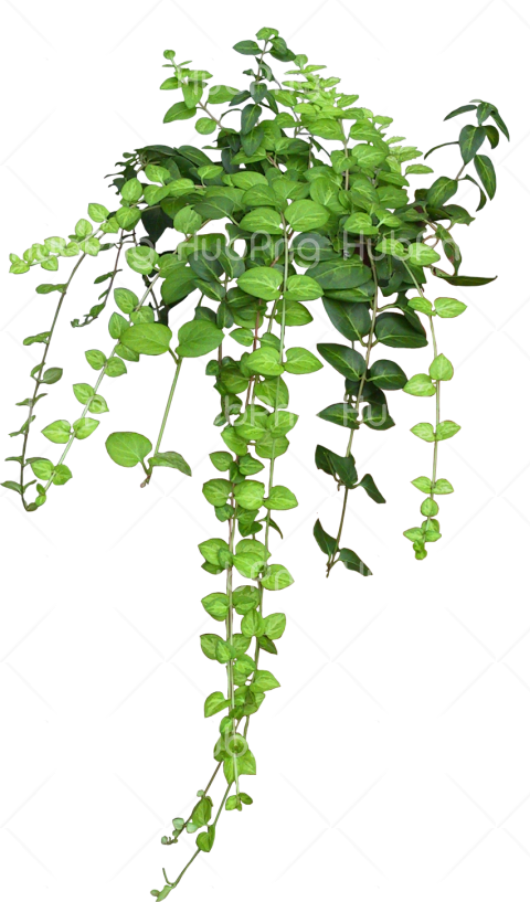 leafs png Transparent Background Image for Free