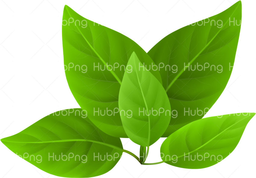leaves png hd Transparent Background Image for Free
