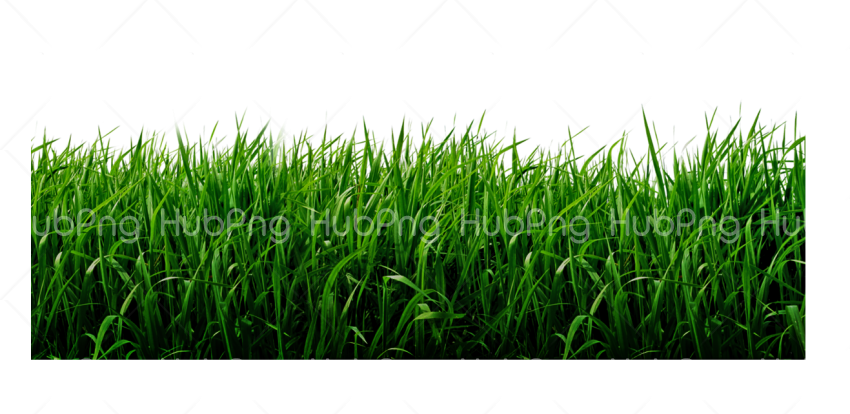 pasto png hd Transparent Background Image for Free