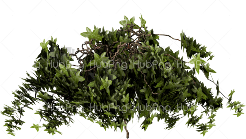 plant Transparent Background Image for Free