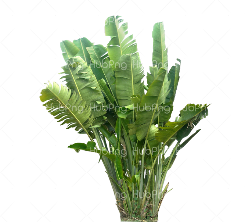 plant png Transparent Background Image for Free
