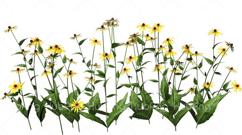 plant png flowers Transparent Background Image for Free