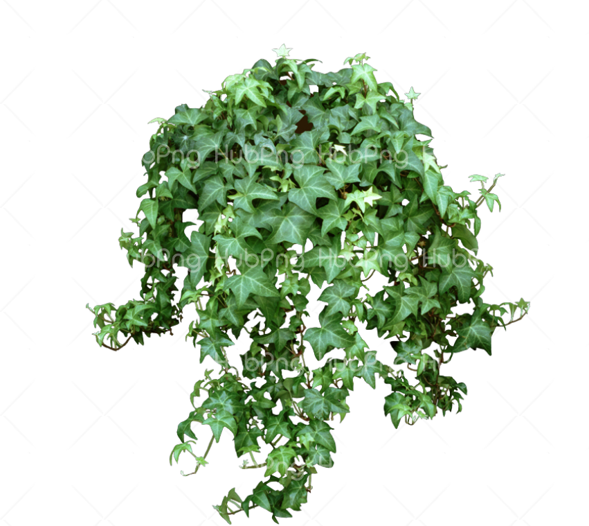 plant png hd Transparent Background Image for Free