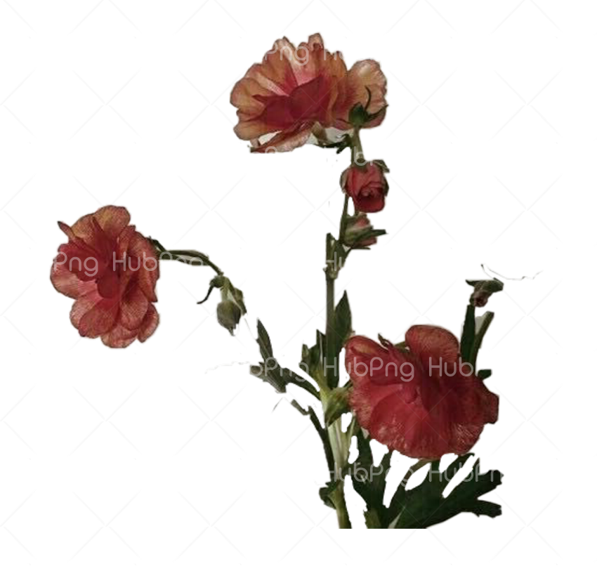 png aesthetic flower Transparent Background Image for Free