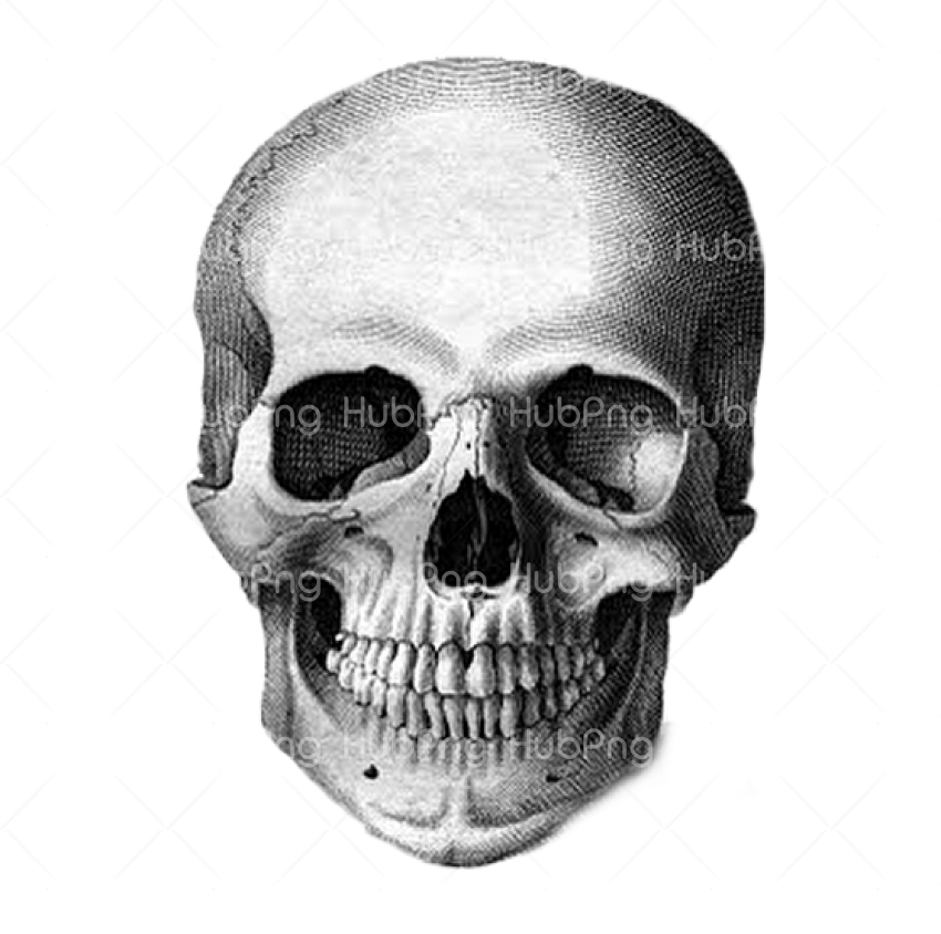 png calavera real Transparent Background Image for Free