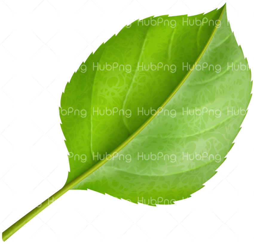 png green Leafs clipart Transparent Background Image for Free