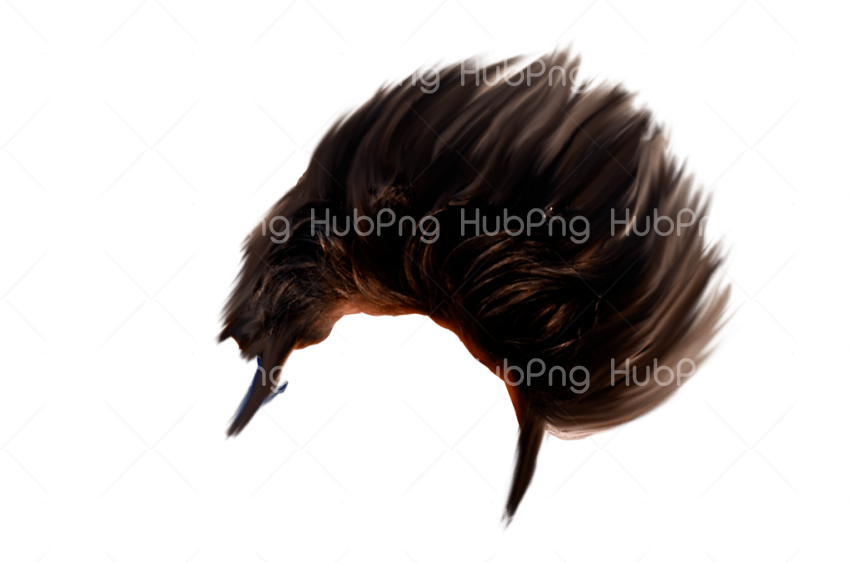 png hd hair Transparent Background Image for Free