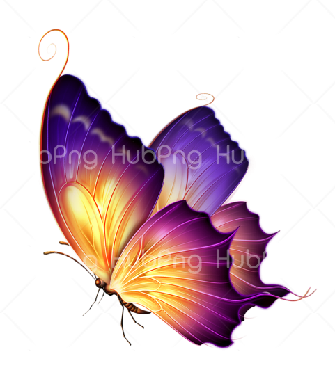 purple butterfly png coloers Transparent Background Image for Free