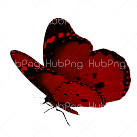 red butterfly png Transparent Background Image for Free