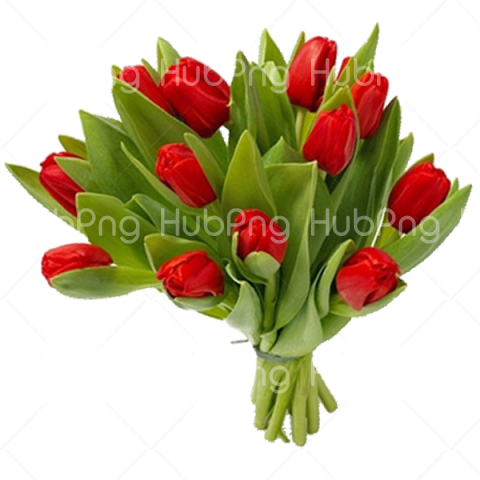 red with green Bouquet flowers PNG Transparent Background Image for Free