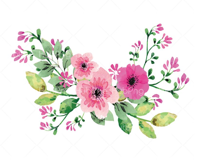 Romantic Pink paint flower, Pink Flower Watercolor Vector png Transparent Background Image for Free