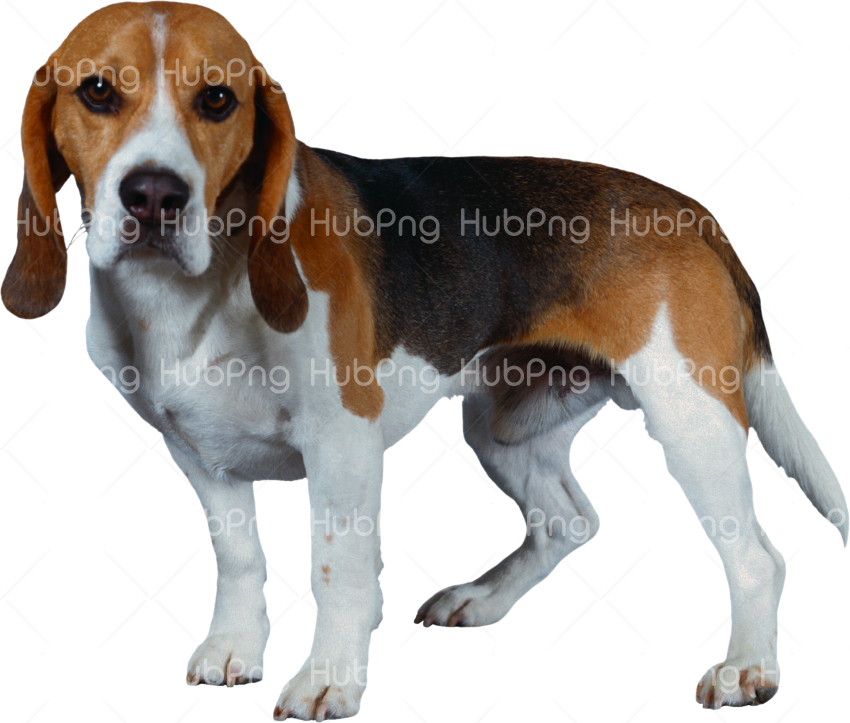 sad dog png Transparent Background Image for Free